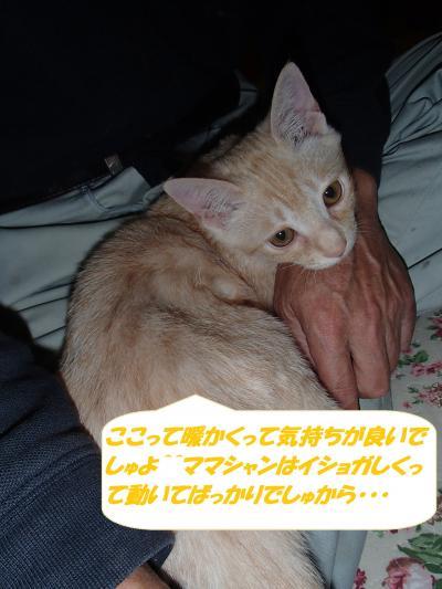 PA242227_convert_20141026131917.jpg