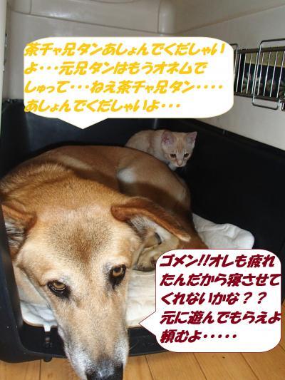 PA242228_convert_20141026131946.jpg