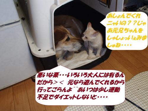 PA242229_convert_20141026132018.jpg