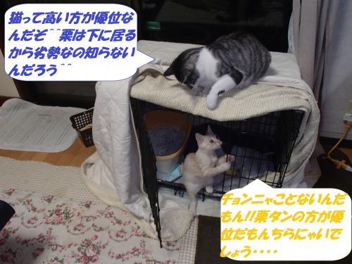 PA252244_convert_20141027131942.jpg