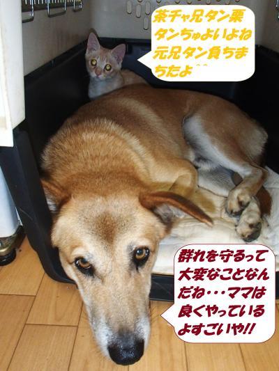 PA252246_convert_20141027131926.jpg