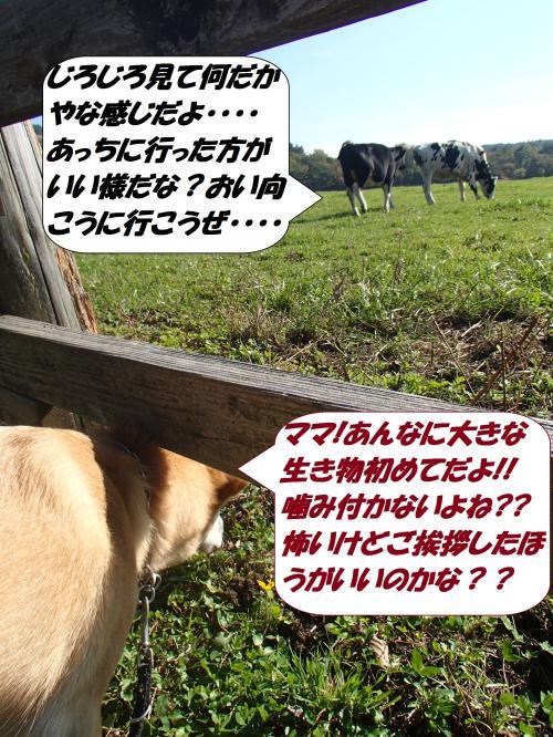 PA292300_convert_20141031120121.jpg