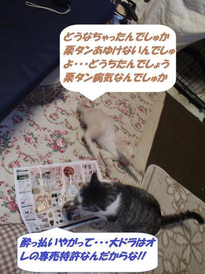 PA292302_convert_20141101142449.jpg