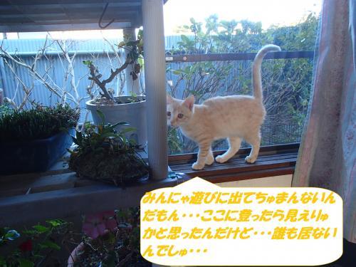 PB042357_convert_20141108132522.jpg