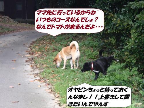 PB062375+(2)_convert_20141112122642.jpg