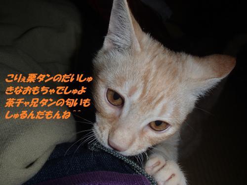 PB102399+(2)_convert_20141111093909.jpg