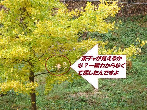 PB122441_convert_20141113124901.jpg
