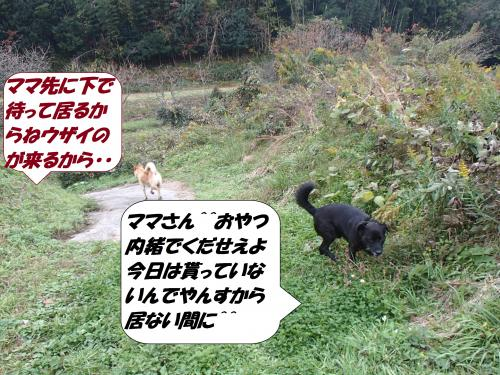 PB122444+(2)_convert_20141113124928.jpg