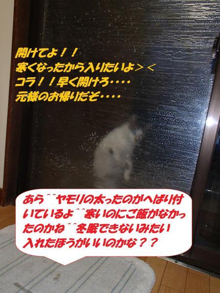 PB162465_convert_20141120133939.jpg