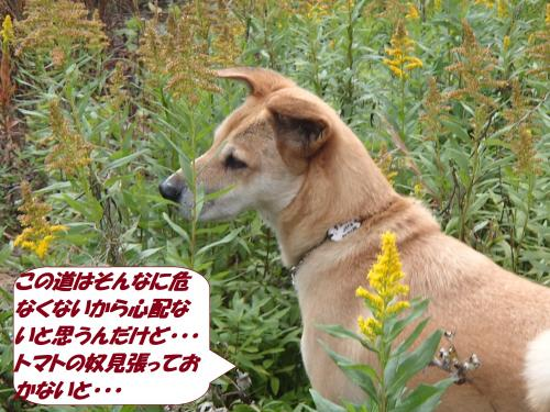 PB182525_convert_20141119140129.jpg