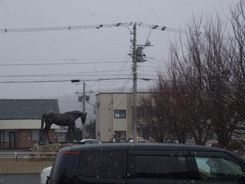 20140322_ハイセイコー馬像と雪