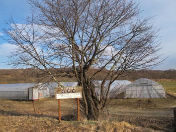 20140417_ふるさとの木