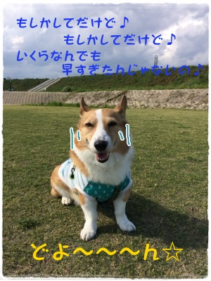 11hayasugi.jpg