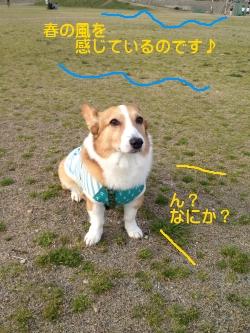 harujiro250.jpg