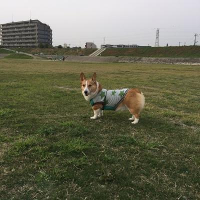 hiroijiro.jpg
