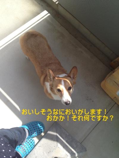 hoshiimojiro01.jpg