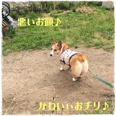 hoshijiro5.jpg