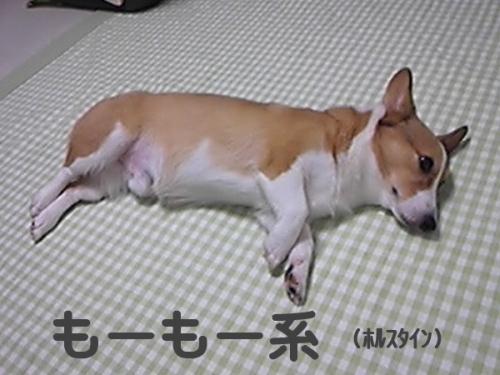 moumoukei88.jpg