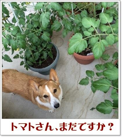 tomajiro9.jpg