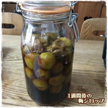 umeshiro77.jpg