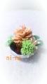 DCF00023_201403110936599f4.jpg