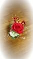 DCF00082_20140320102959064.jpg