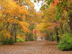 紅葉の札幌