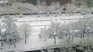 雪模様の大通公園