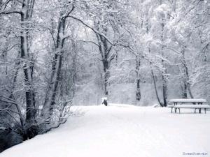 virgin snow イメージその3