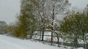 葉が残る木に積雪