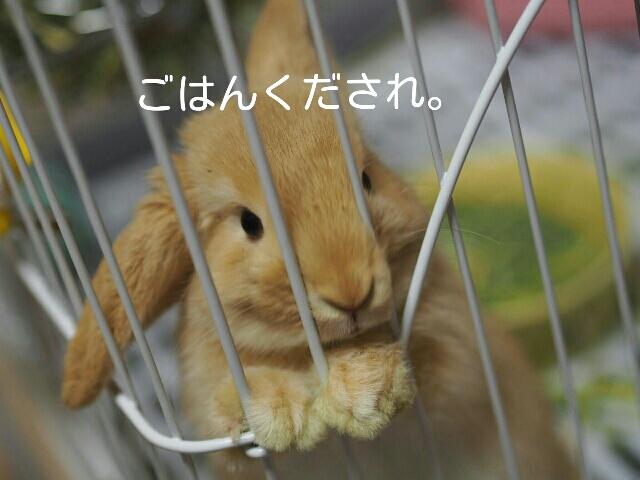 おねだりるるさん 2014/4/27