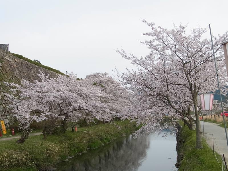 sasayama03-20140412.jpg