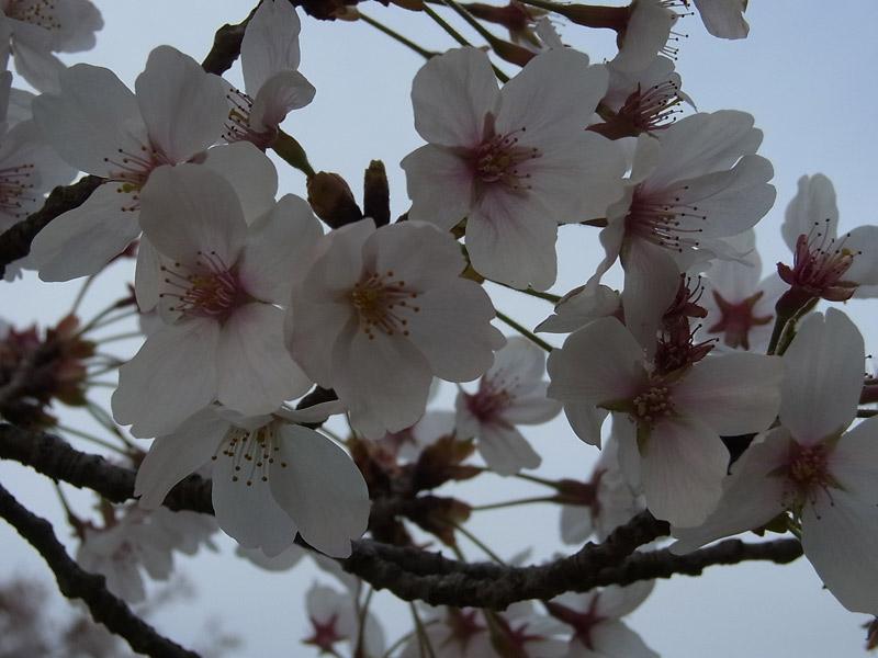 sasayama04-20140412.jpg