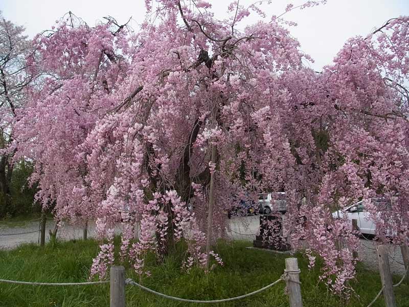 sasayama05-20140412.jpg