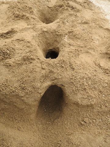 砂の作品2