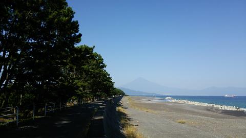 0761 三保の松原松並木