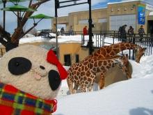 雪の中のキリン