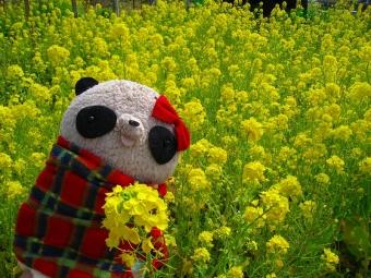 ばぶちゃん菜の花畑にて