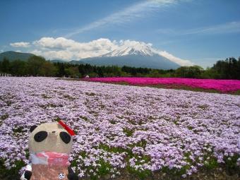 芝桜の妖精おばぶ