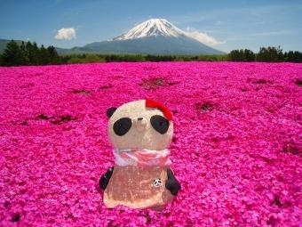 おばぶ芝桜2014