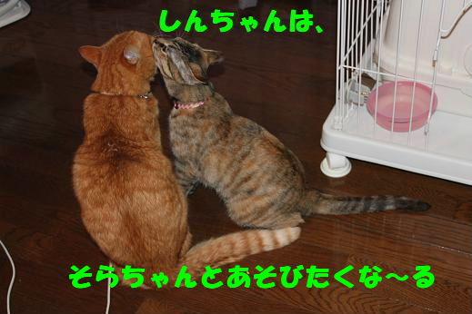 IMG_4436.jpg