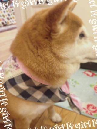 2014.3.15戦利品②