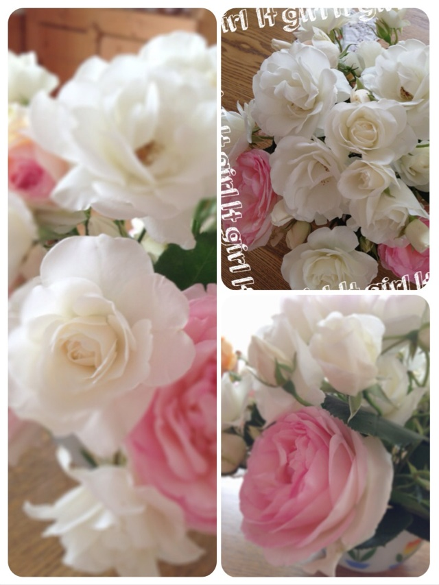 2014.5.20薔薇