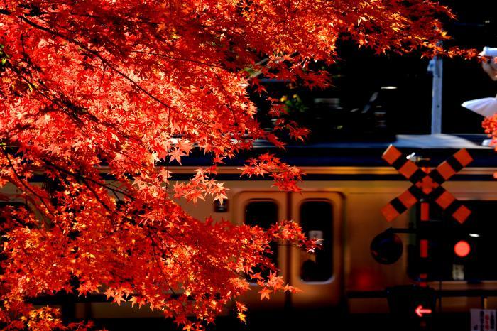 紅葉 電車
