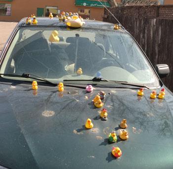 duckcar3.jpg