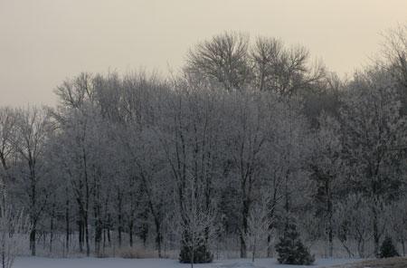 frost03201402.jpg