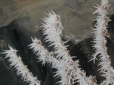 frost03201405.jpg