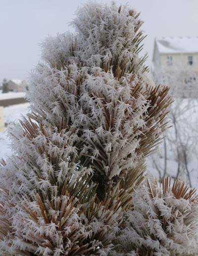 frost03201411.jpg