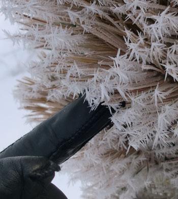 frost03201412.jpg