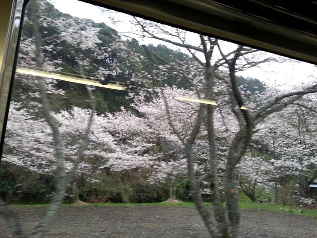 nishikigawa_006.jpg